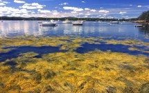 Seal Harbor, Islesboro seaweed and lobster boats