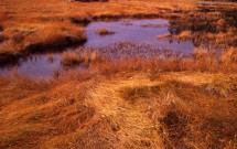Autumn grasses at The Narrows, Islesboro