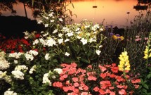 Gilkey Harbor flowers at sunset