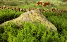 Triangle of rock with cows